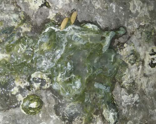 凯鸽鸽药和你分享,爱鸽习惯性水绿便怎么办?
