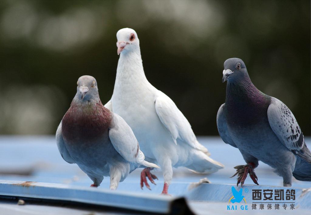 凯鸽鸽药提醒:天气异变 注意防护