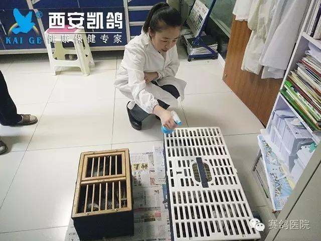 赛鸽医院人员正在做抗体检测工作